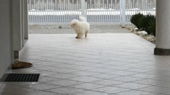 Playful Dog In Slow Motion Stock Footage