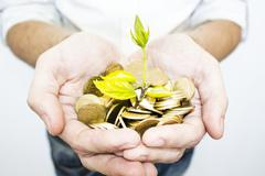 Money tree - stock photo