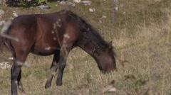 Wild Horses Stock Footage