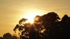 Sunrise over treeline Stock Footage