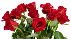 Dozen red roses closeup, being sprayed with water. Stock Footage