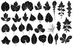 Set of different leaves Stock Illustration