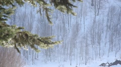 Focused on far trees next to the branches in winter time at Kartepe, Izmit Stock Footage