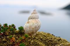 Beautiful spiral sea shell in summer - stock photo