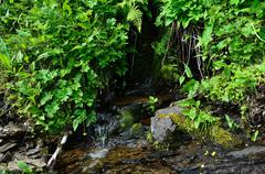 Spring of water coming out from the mossy rock in summer - stock photo