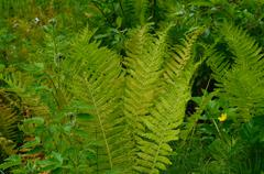Green arctic fern plant Stock Photos