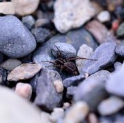 Big spider on rocky ground in summer macro photo Stock Photos