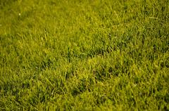 Green grass lawn in summer sun Stock Photos