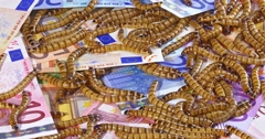 Big ugly worms crawling over euro banknotes background, Stock Footage