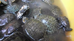 Tortoises in the pet market, very cute Stock Footage