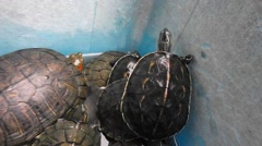 Tortoises in the pet market, very cute Stock Footage