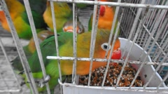 Shut in the cage bird, lost freedom Stock Footage