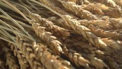 Ears of Wheat, Grain and Flour Stock Footage