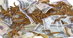 Big ugly worms crawling over dollars banknotes background Stock Footage