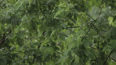 Rain on a background of green trees 20 seconds Stock Footage