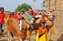 Jockey leads Bulls in Madura Bull Race, Indonesia - stock photo