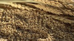 Rich Harvest of Grain Stock Footage