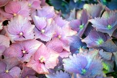 Spring flowers pastels - stock photo