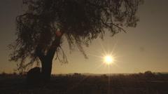 California Desert Sunrise Stock Footage