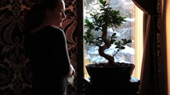 Woman prunes and cares after bonsai ficus - stock footage