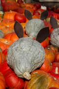 2010_pumkinfield_mice - stock photo