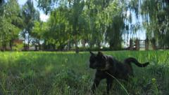 Funny black cat walks in the park - stock footage