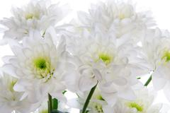 Close Up of White Flowers Stock Photos