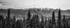 Early Morning Light Olympic Mountains Hurricane Ridge Stock Photos