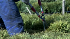 Gardener cutting bush with secateurs Stock Footage