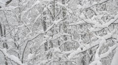 Snow falling in forest on background of leafless trees Stock Footage