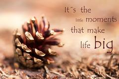 Fir Cone with Saying Its the little Moments that make Life Big Stock Photos