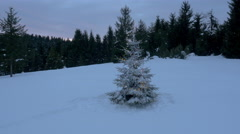 Aerial - Around snow-covered and light up Christmas tree in the forest Stock Footage