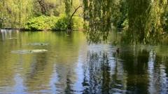 Trees River reflection ducks summer 02svv Stock Footage