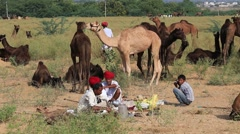 Video 1920x1080 Indian men and camels attended the annual Pushkar Camel Mela Stock Footage