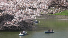 Happy couple enjoy journey boat river lake Sakura cherry tree flower Tokyo icon Stock Footage
