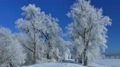 4K UHD - Hoarfrost on trees Stock Footage