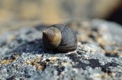 Stock Photo of beautiful snail in snailhouse on stone in summer sun