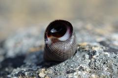 beautiful snail in snailhouse on stone in summer sun - stock photo