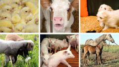 Baby Animal Montage Stock Footage