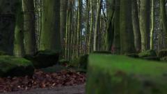 Green forest floor rack focus Stock Footage
