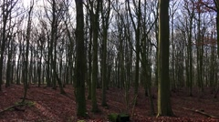 Dark forest trees winter Stock Footage