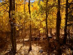 Autumn Grove Stock Photos