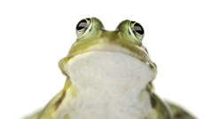Close-up of a Common water frog Stock Footage