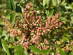 Adriatic botany 3 - stock photo
