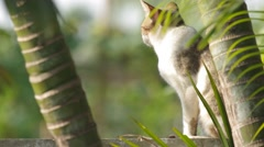 Domestic cat relaxing on the wall - stock footage