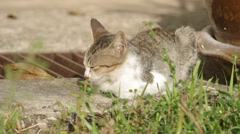 Domestic cat relaxing on the floor - stock footage
