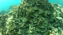 Free Diving over Coral Stock Footage