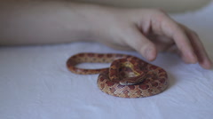 Hand touch the snake Stock Footage