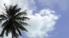 Timelapse of Coconut Palm Tree Against Blue Sky Arkistovideo