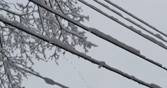 4K, Ice and snow on outdoor power lines Stock Footage